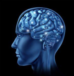 brain-912-290x300.jpg